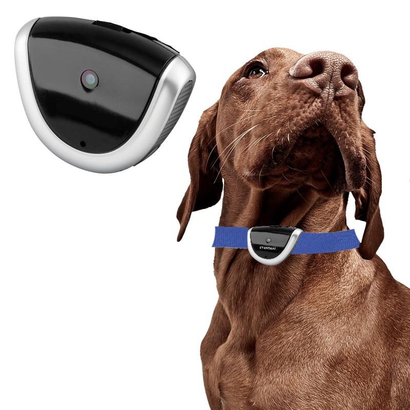 Cámara de video para Perros de caza 8GB para grabar , camara perro al mejor precio, comprar camara para perros, camara video para caza