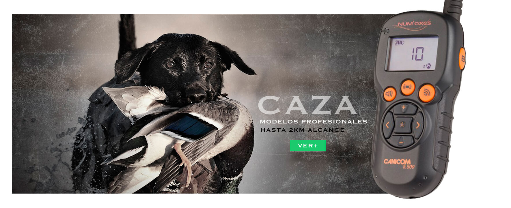Collares adiestramiento perros de caza